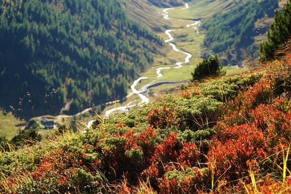 Prächtige Herbstfarben - im Hintergrund die noch junge Mur