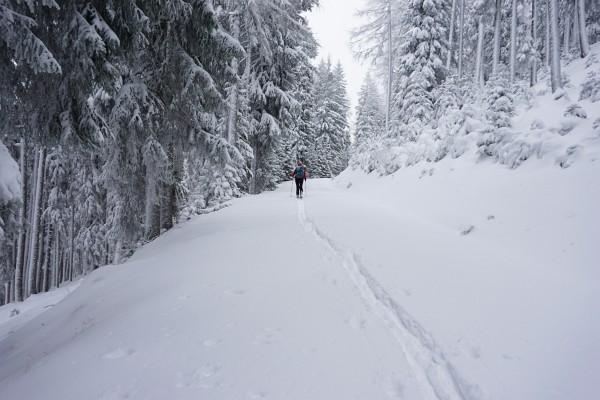 Am nächsten Tag: Spuren auf der Forststraße auf den Kochofen.