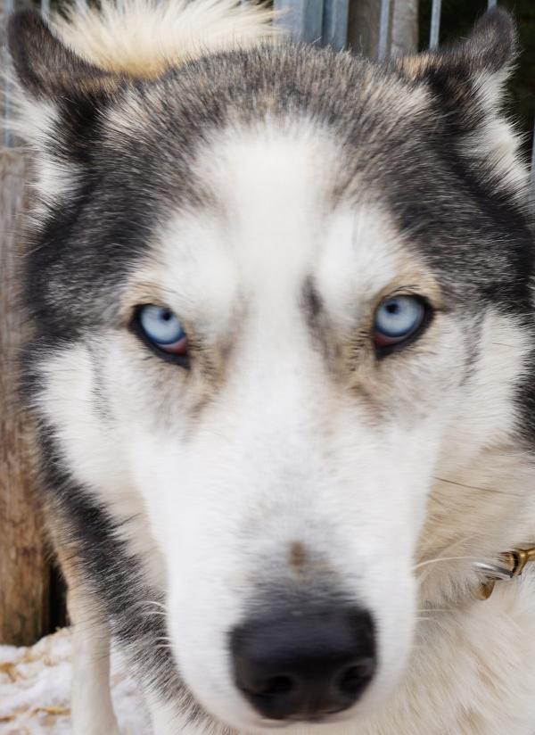 Jackson mit seinen markant-blauen Augen