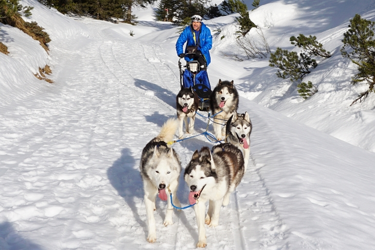 Von links vorne nach rechts hinten: Sitka, Grizzly, Tala, Gus, Sally, AlpenYeti