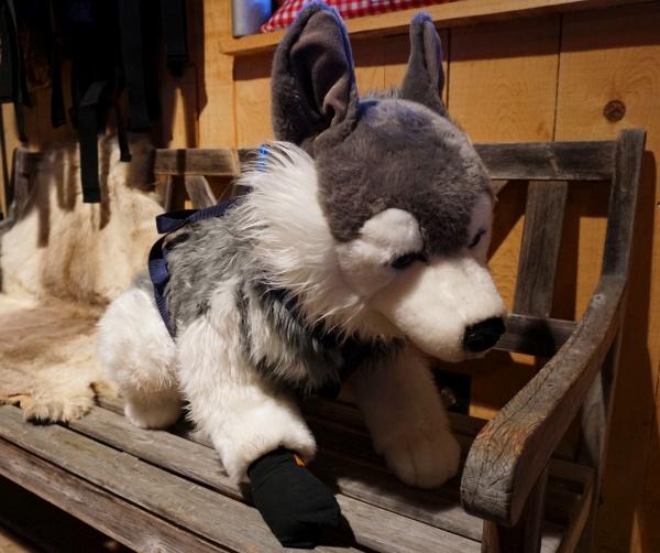 Auch Husky-Toni hat einen Plüsch-Hund. Sogar mit Socken.