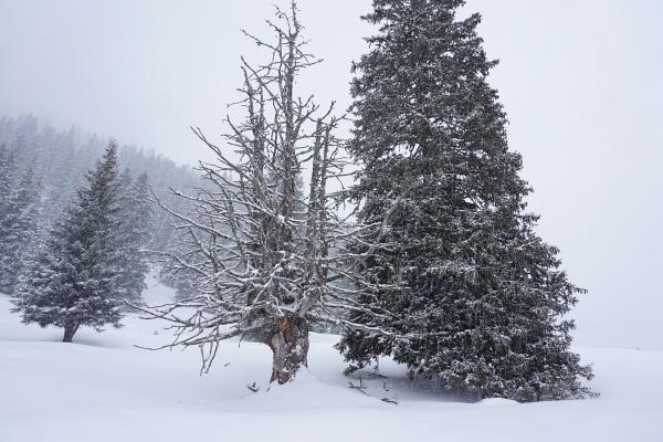 Bei einem markanten Baum verließen wir die Markierung Richtung Schillersattel und folgten dem Forstweg nach Norden.