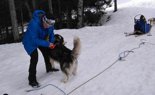 Das Anleinen der Hunde - hier bei Sally - gestaltet sich wegen der begeisterten Vorfreude der Hunde gar nicht so einfach.