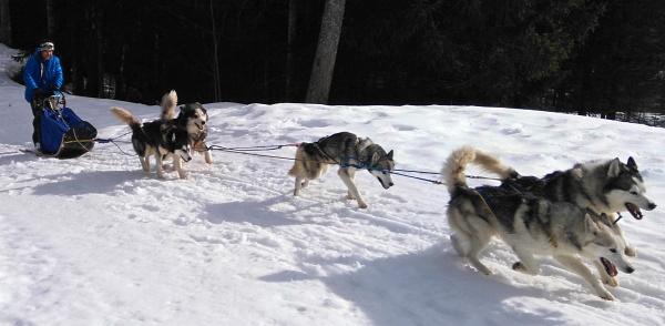 Meine ersten Meter am Hundeschlitten