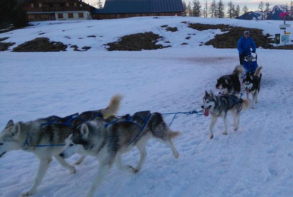 Rückkehr im Husky-Camp nach fast 3-stündiger Ausfahrt
