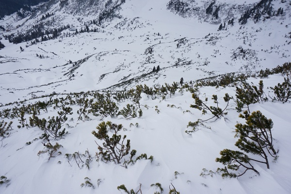 Hier irgendwo müsste der Schi hinuntergerutscht sein. Möglicherweise bis zu den 2 markanten Bäumen oberhalb der Bildmitte (ca. 200 Höhenmeter unter mir).