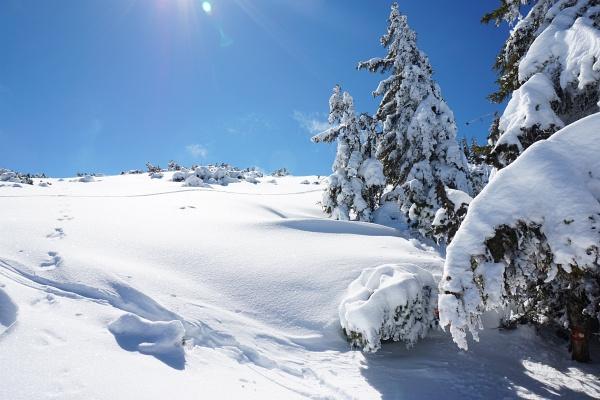 Winterstimmung am Weg auf die Gasselhöhe.