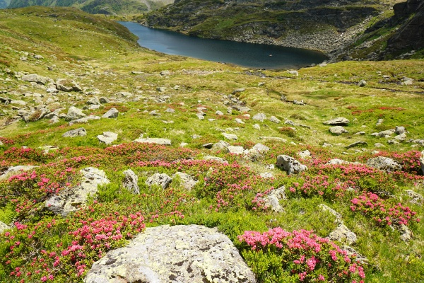 Über Almrauschfelder zum Ahornsee