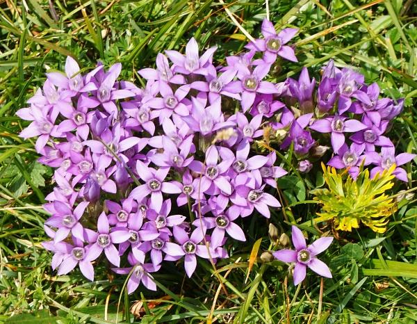 Alpenblumen und Alpentiere prägten die heutige Wanderung