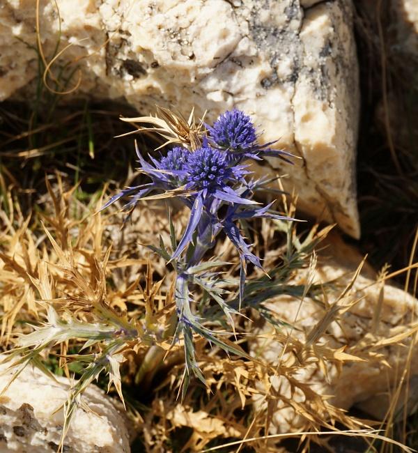 Blüten in der kargen Karstlandschaft