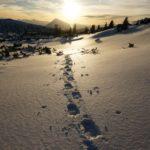 Der Weg ist das Ziel. Ich liebe diese einsamen Schneeschuhwanderungen oberhalb der Baumgrenze.
