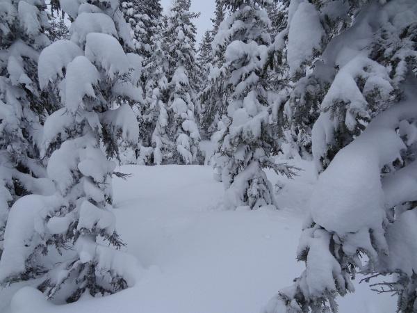 Im Winterwald oberhalb vom Michaelerberghaus