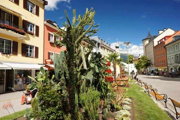 Südliches Flair mit Kakteen und Palmen am Hauptplatz von Lienz