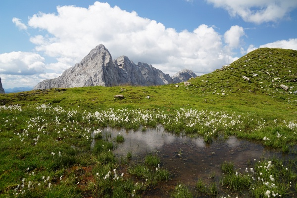 Wollgras am Weg zur Wolayerseehütte.