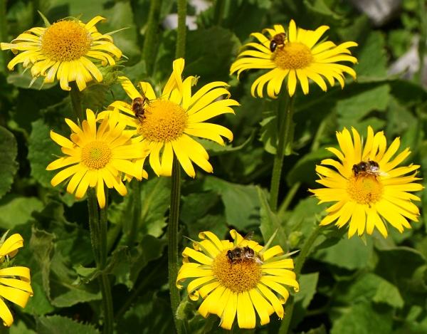 Und dann war da noch die Geschichte von den Bienen und Blumen.