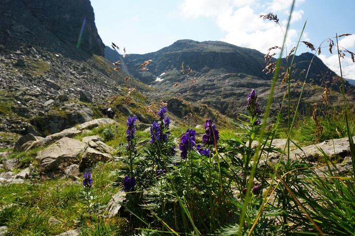 Nach dem schlangenbewachten Steilanstieg ist es am Plateau nicht mehr schwierig auf die vor mir liegenden Wildlochhöhe.