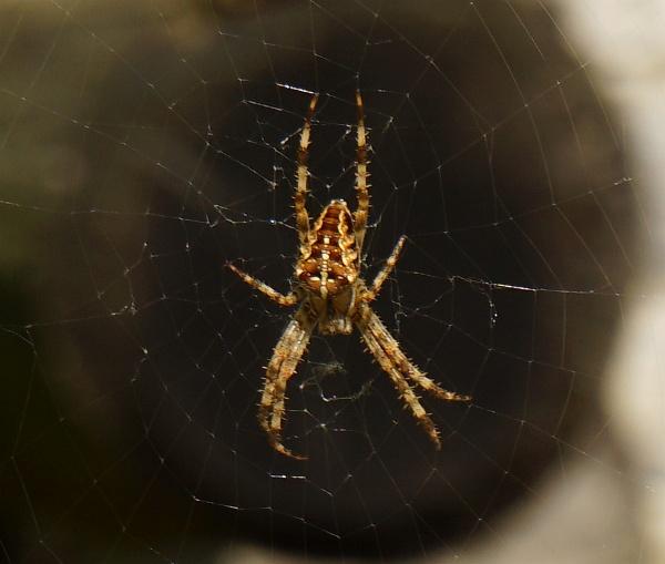 Spinnen findet man derzeit im Überfluß