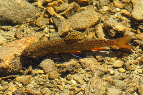 Fisch für Fisch entließ Martin in das glasklare Bergwasser des Knappensees.