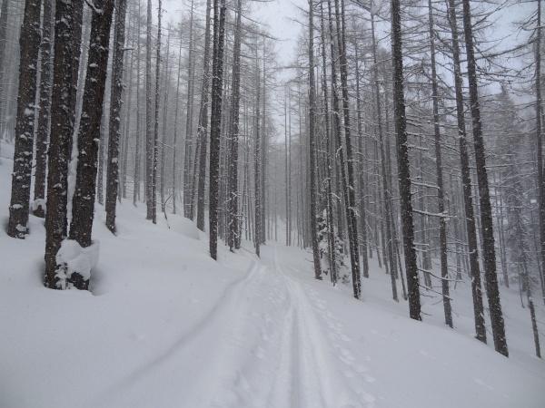Herrliche Schneebedingungen oberhalb der Baumgrenze und im oberen Waldbereich.