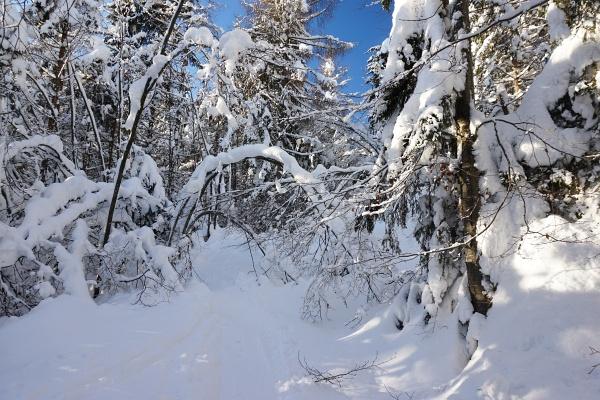 Fast schon zuviel Schnee in den Hohlwegen vom Ödensee Richtung Ausseer Zinken.