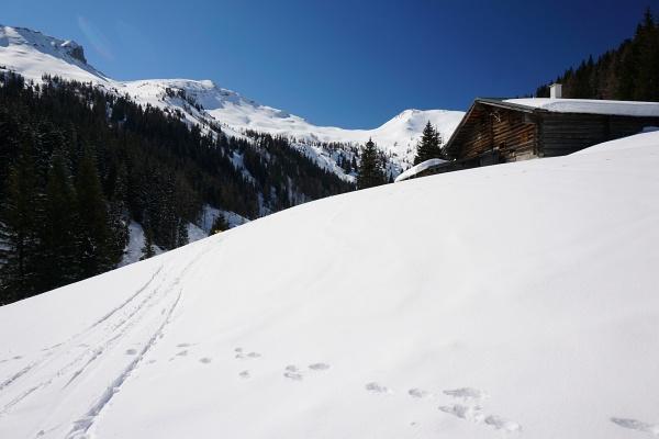 Bei der Oberharbachalm erkennt man rechts hinten bereits das Gipfelziel - das Throneck.