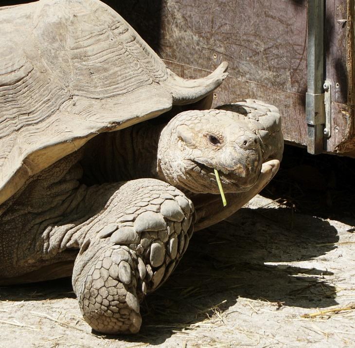Lässige Schildkröte