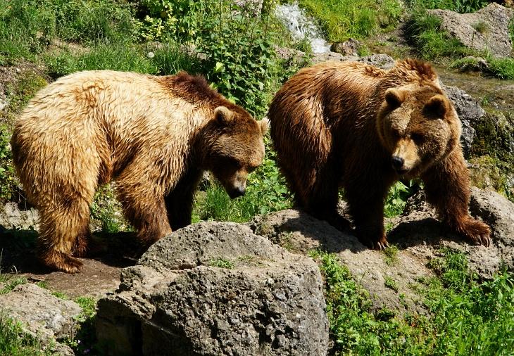 Es hat sich ausgezahlt, dass wir bei den beiden Braunbären ...