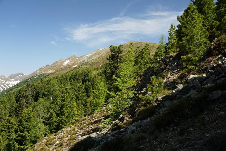 An der Waldgrenze kann ich jetzt erstmals den Höhenzug erkennen, den ich in der Folge überschreiten werde.