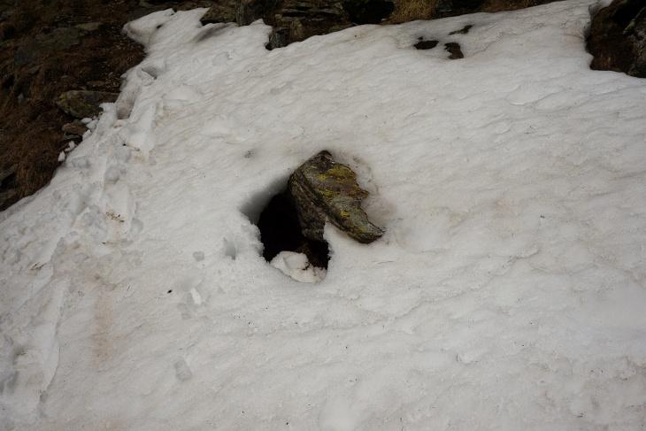 Beim Hinweg hat dieser Stein nur wenige Zentimeter aus dem Schnee gelugt. Instinktiv bin ich bei der Querung auf ihn gestiegen. Wenige cm weiter links wäre ich in ein Schneeloch geplumpst, welches jetzt beim Rückweg bereits ausgeapert ist.