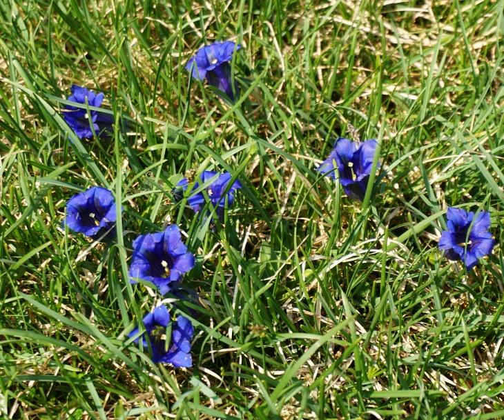 6 Geocaches, etliches Getier und unzählige Alpenblumen säumten unseren Weg.