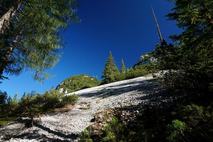 Bis zur Waldgrenze ist die Südworute auf den Kamm eher eintönig und häufig nur steil.