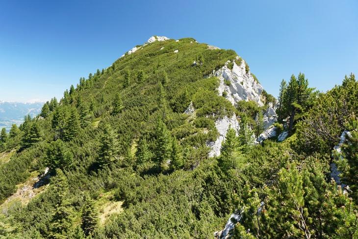 Abstieg im Latschendickicht zum Törl