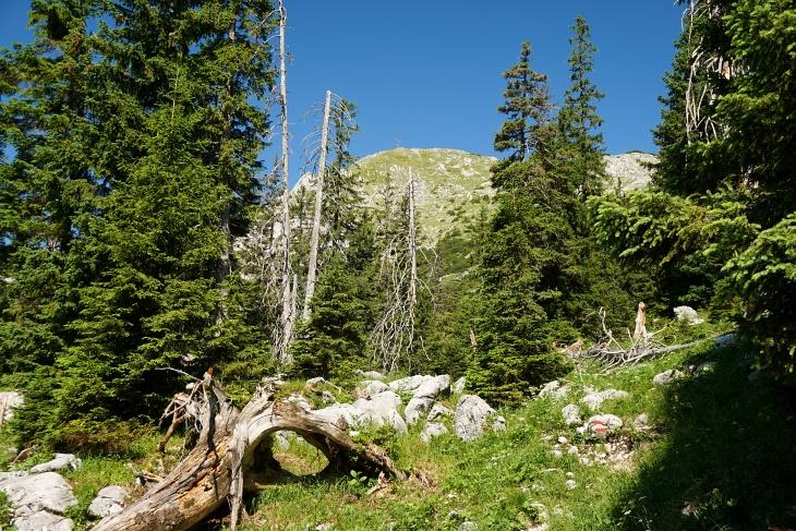Noch mehr als 300 Höhenmeter zum großen Gipfelkreuz am Brunnkogel