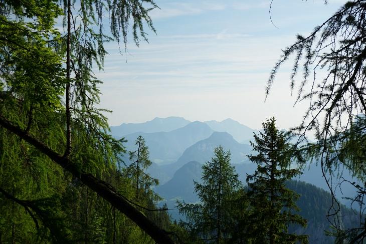 Durchblick im Steilwald