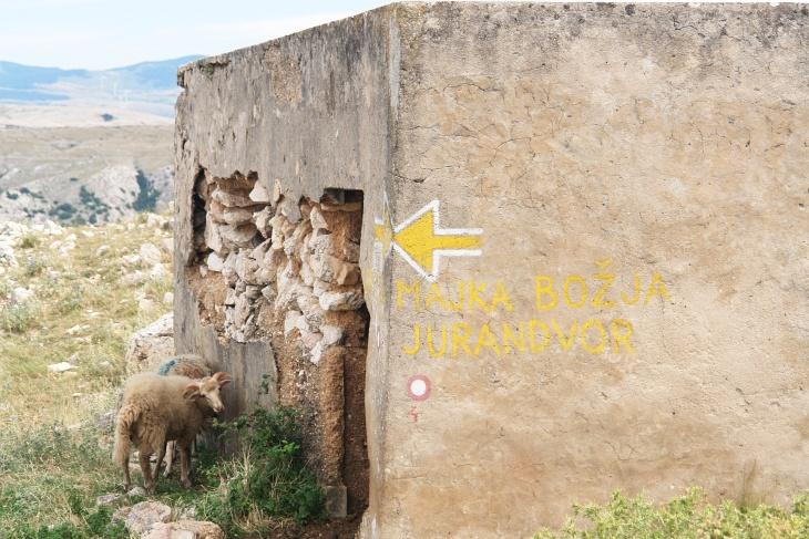Wanderern sind wir heute keinen begegnet und nur oben am Obzova haben wir jemand in der Ferne gesehen. Schafe sind aber keine Seltenheit in diesem Gebiet. Eine bereits bekannte Situation: Schaut man in das Gebäude, stürmt ein großer Rudel Schafe heraus.
