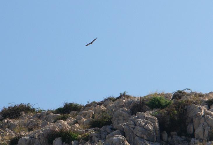 Nun, es war nicht der gefürchtete Pleitegeier (der würde uns erst nach dem Urlaub heimsuchen), sondern die unweit im Vogelreservat nistenden Gänsegeier, Aasfresser mit Flügelspannweiten über 2,5 Meter.