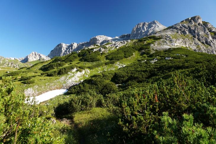 Über Almwiesen und durch Latschengassen bergan.