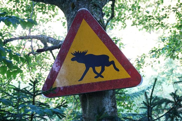 Zwischen Neuhaus und Mauerreith gibt es bereits exotische Tiere.