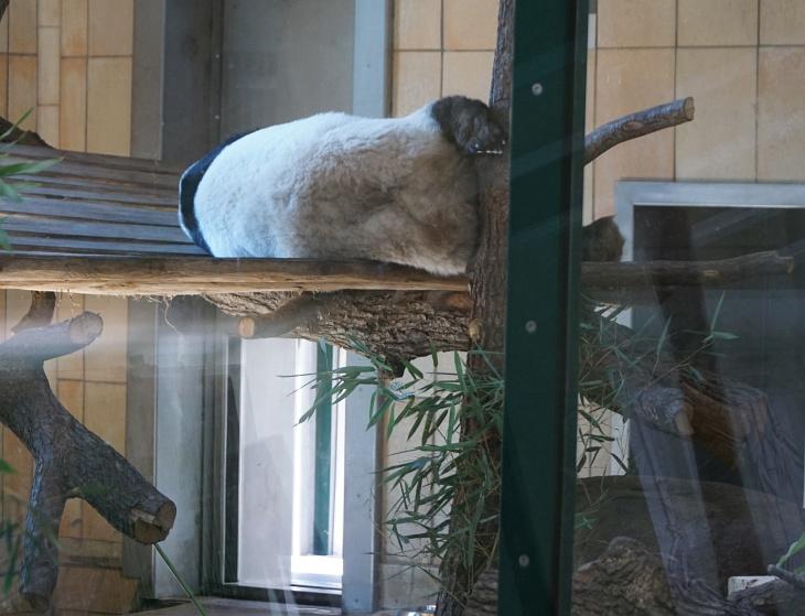 Vom Großen Panda hatte ich mir eigentlich auch mehr erhofft.