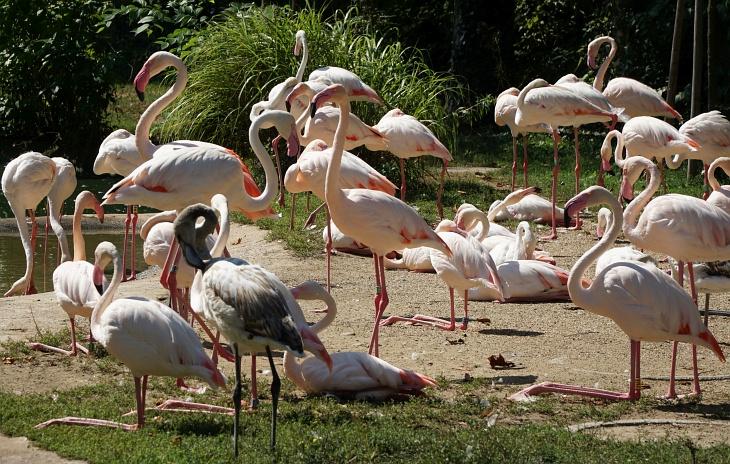 Flamingos auf ihren langen dünnen Stelzen