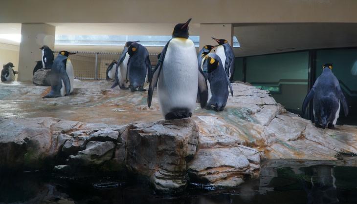 Die Königspinguine im Polarium werden auch erst später besucht.