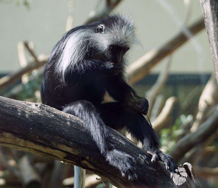 Den Affen, ansonsten häufig auch ein Publikumsmagnet, haben wir uns heute nicht sonderlich ausgiebig gewidmet.