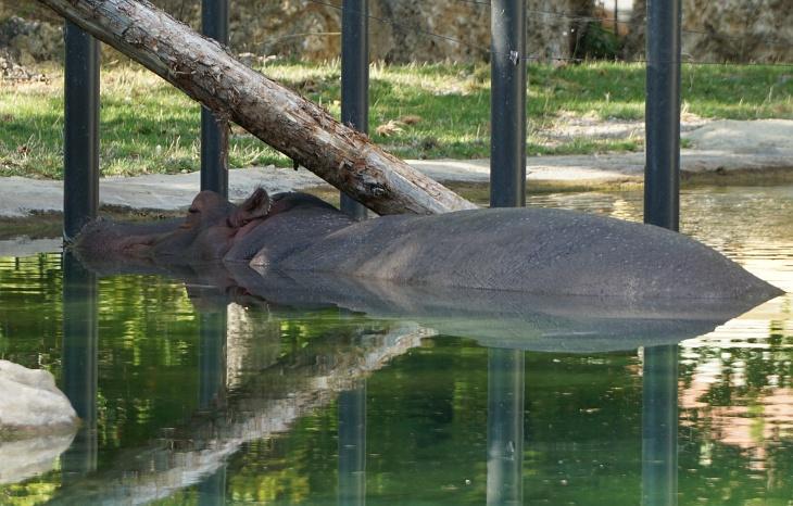 ... auch wenn eines der beiden Tiere seinen Liegeplatz im Tagesverlauf gewechselt hat.