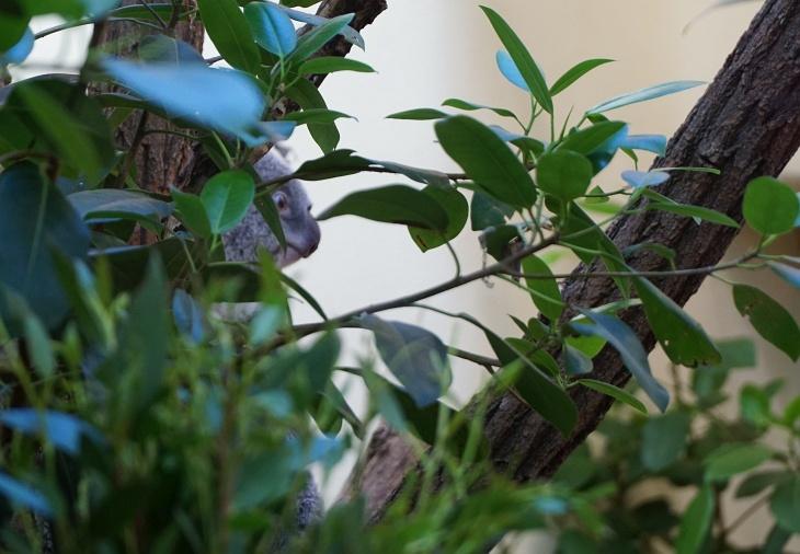 Den Koala kurz gesehen und rasch wieder raus aus dem überfüllten Gebäude.