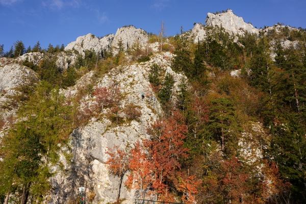 Herbstfarben beim Einstieg in den Naturfreundesteig, der am Nachmittag bei unserer Rückkehr in der Sonne liegt.