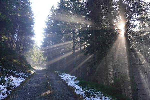 Mehr als 400 Höhenmeter wandern wir unter dem bzw. im Nebel. Oberhalb der Ochsenalm gelangen wir endlich in die angenehm wärmende Sonne.