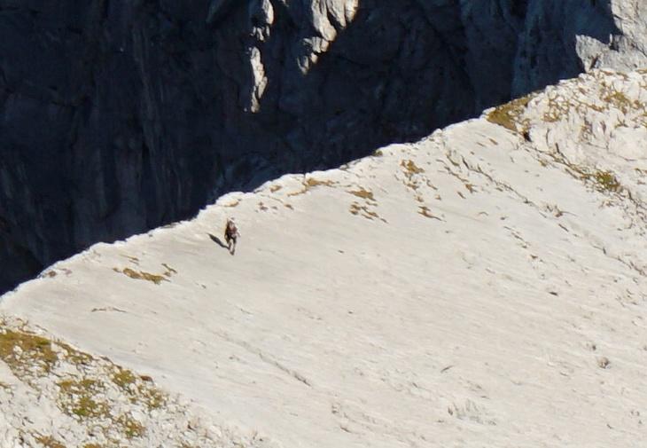 Der Bergsteiger am Dachlgrat im Zoomblick.