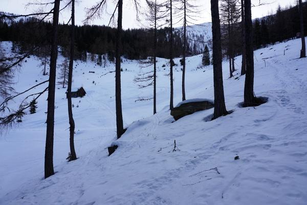 Nach Donnersbachwald und Oppenberg geht es heute auf der Suche nach Pulverschnee in die Kleinsölk. Auf den unteren 600 Höhenmetern bis zur Bröckelalm sind die Schneemengen aber extrem dürftig und nicht lohnend.