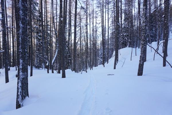 Tolle Pulververhältnisse gab es nur im Wald. Weiter oben im Wind wurde es aber wieder unwirtlich und ich kehrte vorzeitig um.