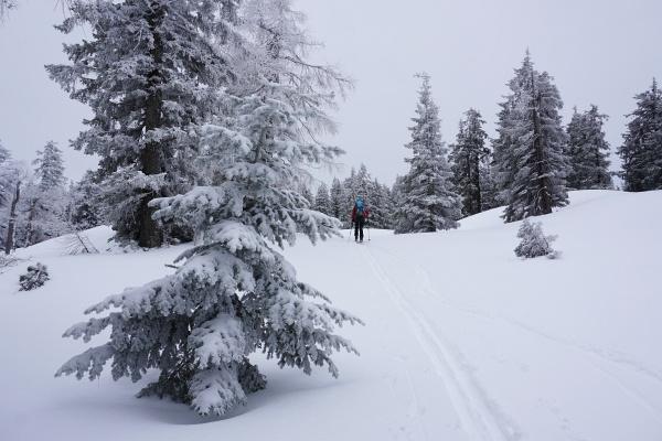 Herrliche frostige Winterstimmung bei leichtem Schneefall am Weg zum Kampl - keine Sonne, dafür auch kein Anstollen.